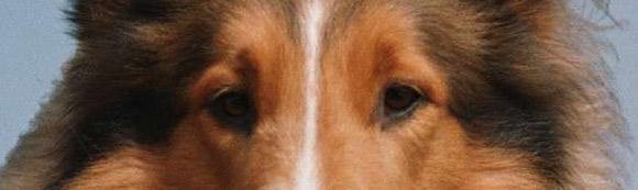 evil-lassie